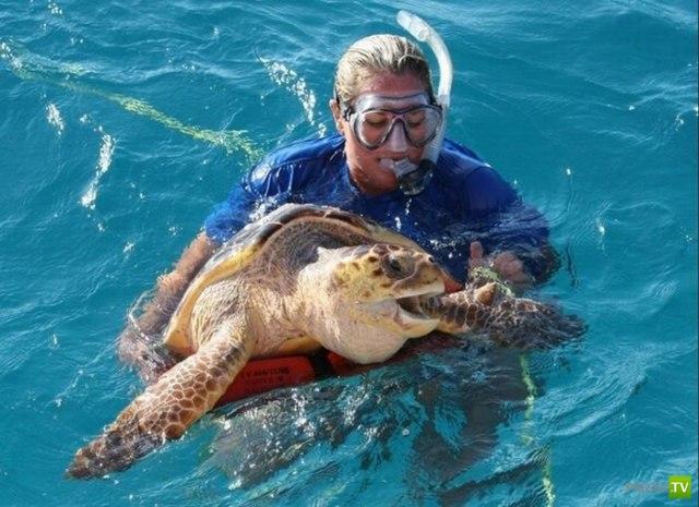 Черепаха vs рыбка (5 фото)