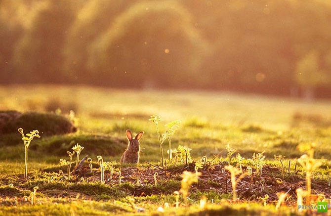 Природа и животные глазами Алекса Сабера (22 фото)