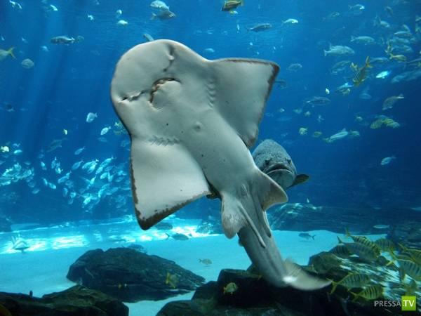 Самый большой аквариум в мире (34 фото)