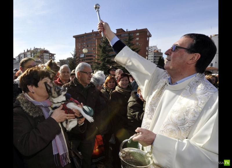 Испания: День Святого Антония