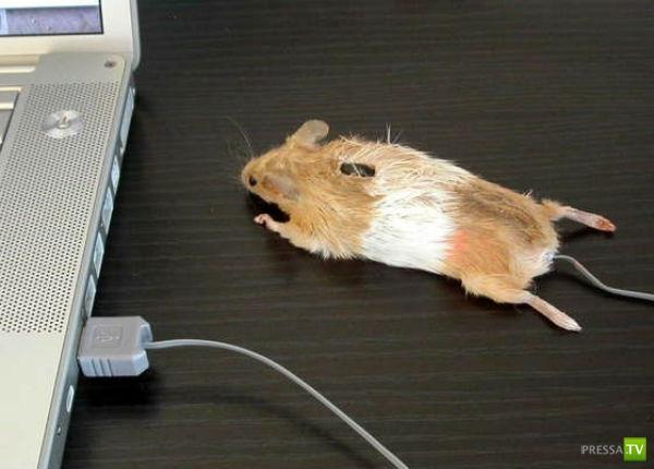 Креативные компьютерные мышки (29 фото)