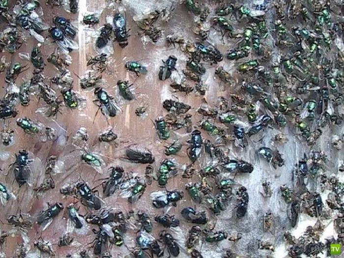 Байкера атаковали насекомые (3 фото)