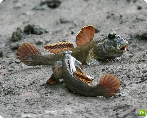Редкие и необычные животные... (15 фото)