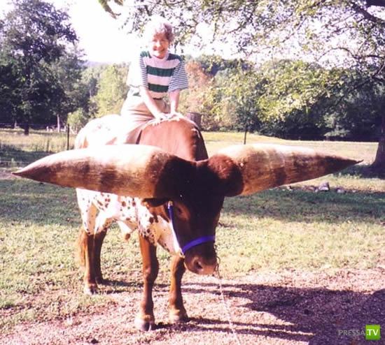 Самые большие рога в мире... (8 фото)