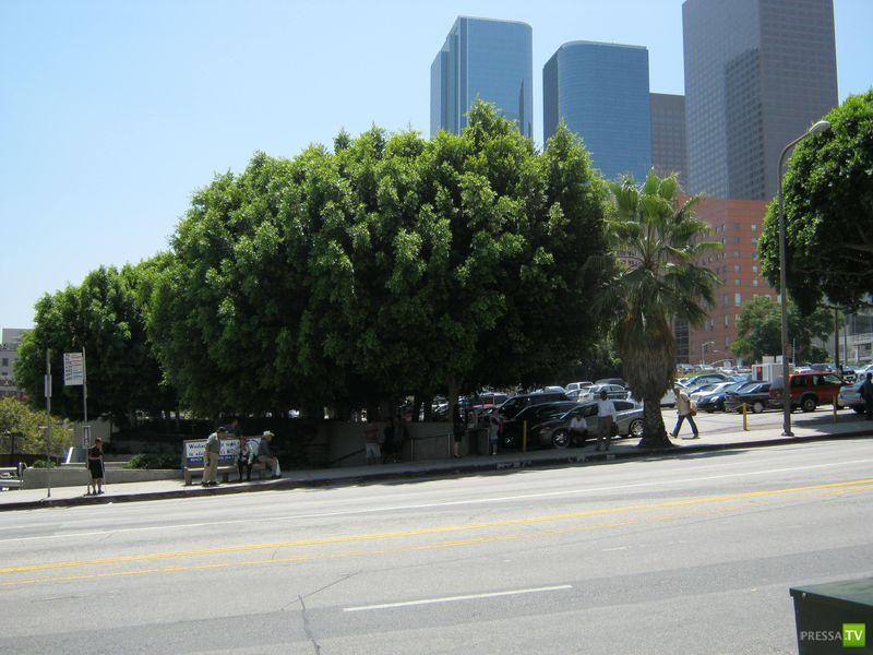 Жизнь в Лос-Анжелесе глазами россиянина