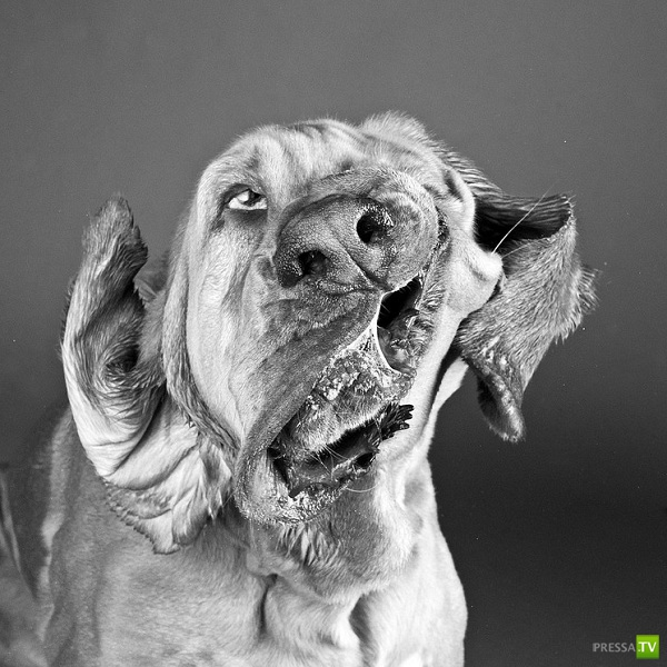 Собаки, отряхивающиеся от брызг (14 фото)