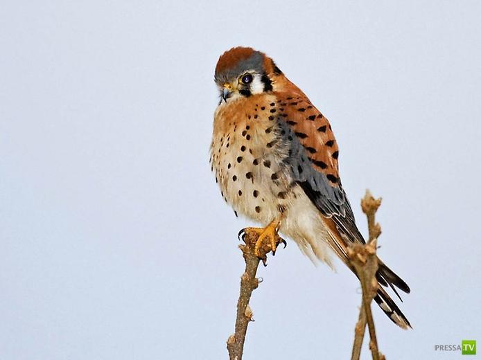 Самые красивые птицы ...