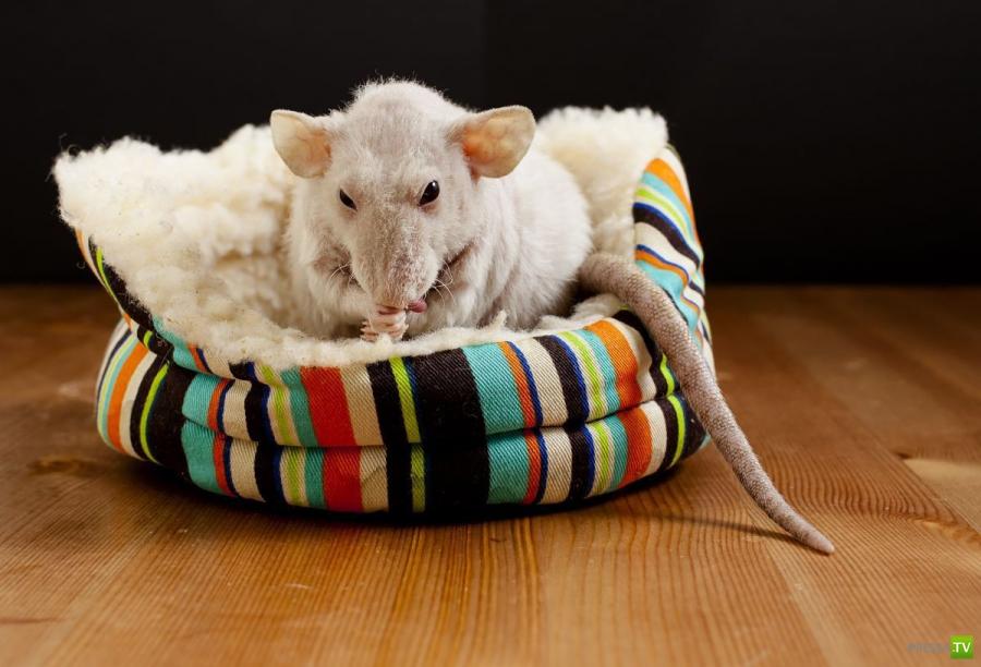 Эти забавные и милые животные Часть 5 (36 фото)