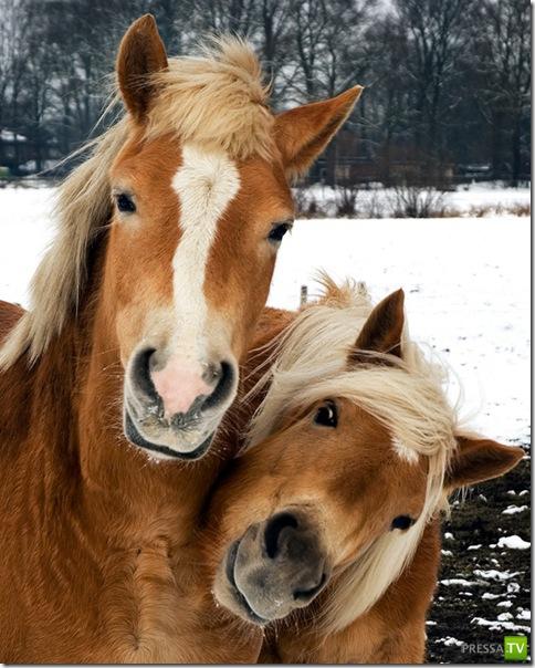 Любовь в мире животных ... (29 фото)