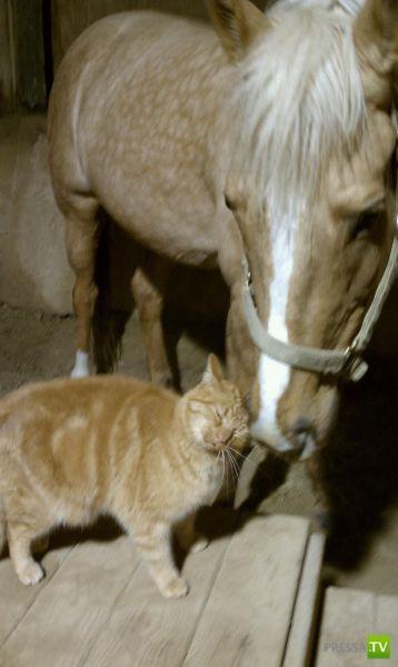 Эти забавные животные Часть 8 (34 фото)
