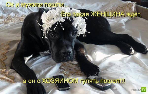 ПёсоМатрица (37 фото)