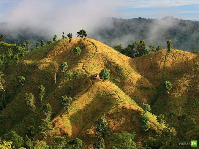 Лучшие фотографии января 2012 от National Geographic (41 фото)