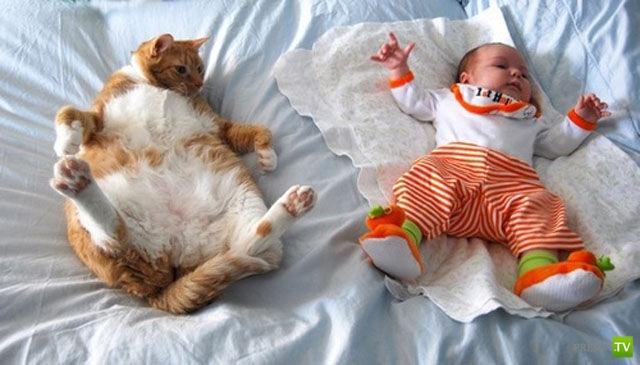 Где спят кошки? (27 фото)