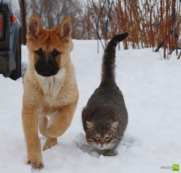Неразлучные друзья Булька и Платон :)