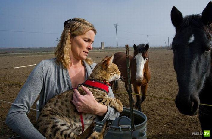 Trouble - кот рекордсмен ...Книга рекордов Гиннеса официально признала кота по кличке Трабл самой большой кошкой в мире