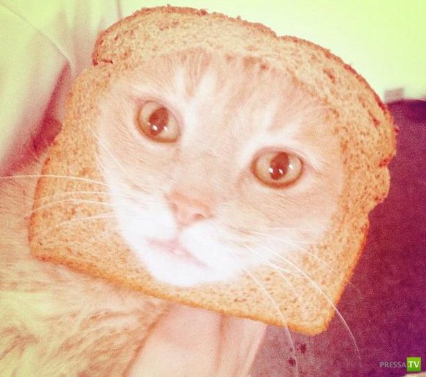 Превращение котов в бутерброд