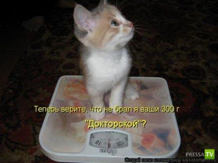 Свежие котоматрицы на среду (38 фото)