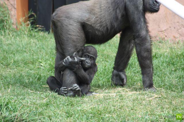 Эти забавные животные часть 9 (31 фото)
