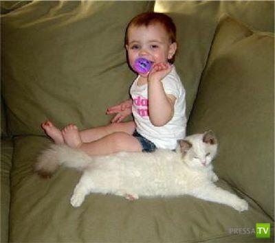 Кошки и детишки... Подборка прикольных фоток (23 фото)