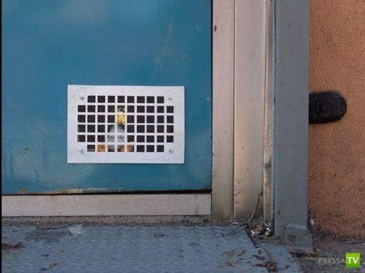 Веселые стиккеры, чтоб напугать своих соседей (22 фото)