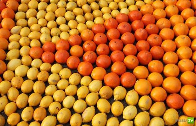 Лимонный фестиваль