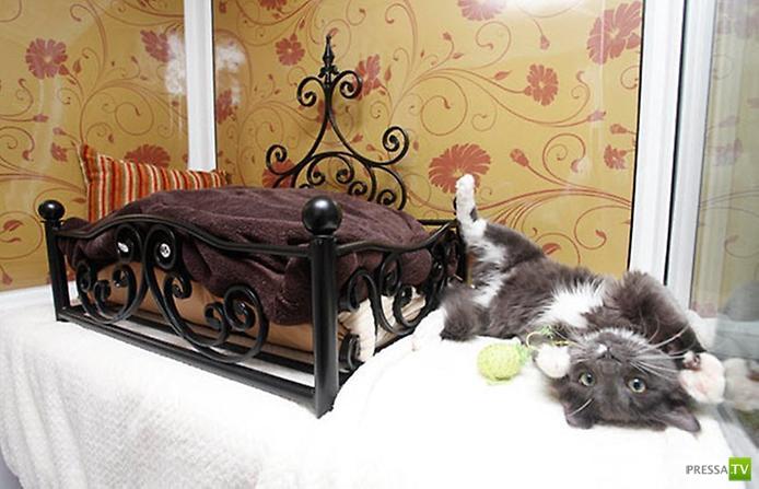 Кошачий отель