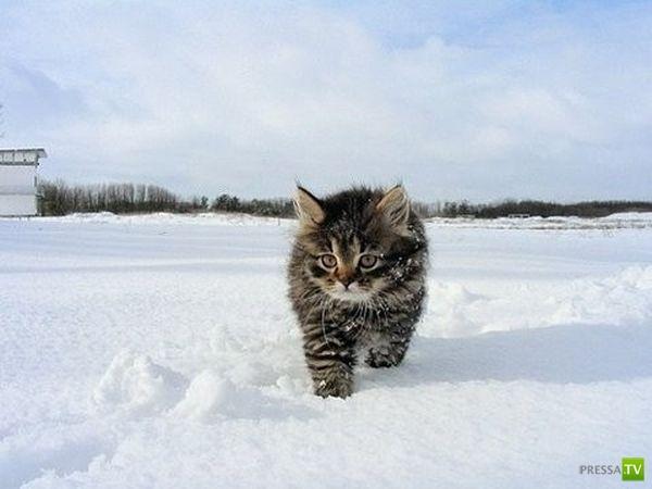 Снег прет котов не меньше валерьянки...