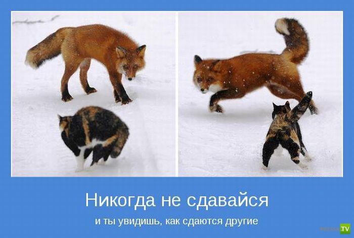 Подборка Мотиваторов (54 фото)