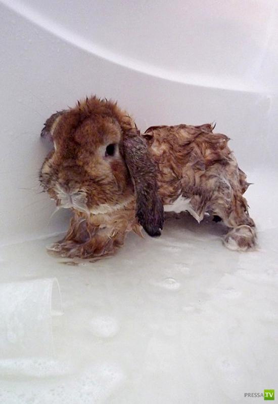 Кролики принимают ванну (18 фото)