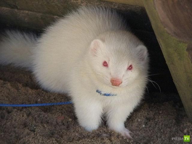 Животные альбиносы... Подборка фотографий (32 фото)