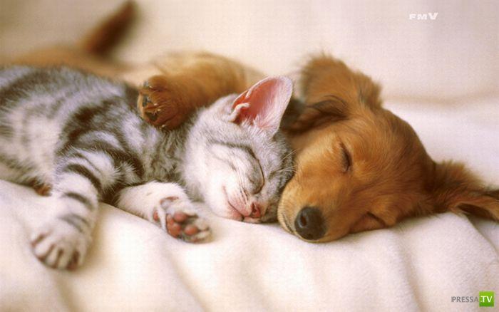 Кошки и собаки... Дружба навек...