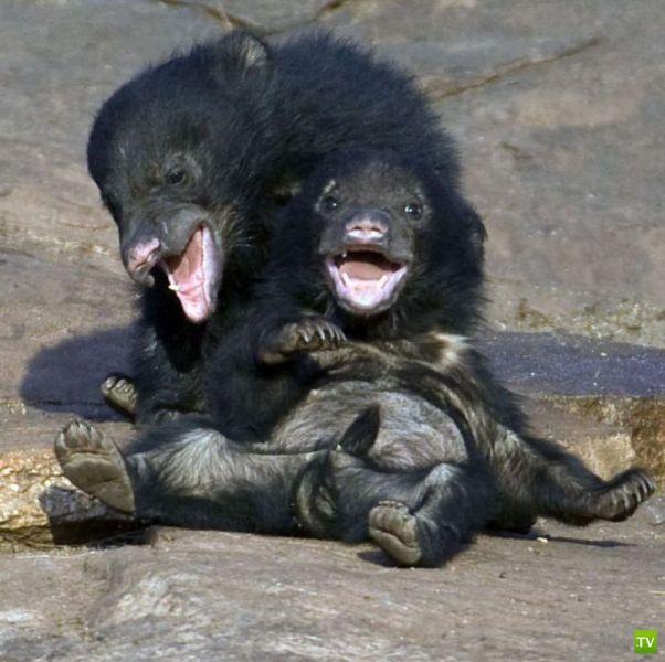 Забавные животные... (27 фото)