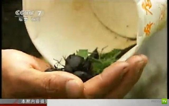 Китайские снайперы не боятся ничего (8 фото)
