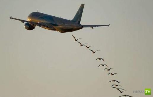101 совет для путешествий самолетом