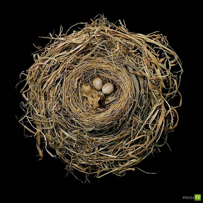 Шедевры птичьей архитектуры (24 фото)