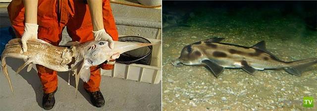 Акула! Самый опасный хищник моря ...