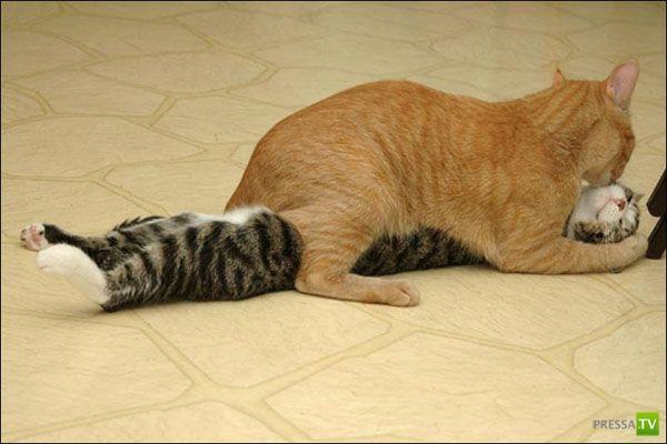 Котов застали врасплох за неприличными занятиями (17 фото)