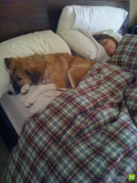 Как спят собаки (5 фото)