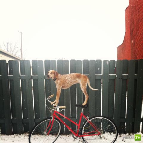 """Собака и законы физики ... или """"Мой хозяин - идиот"""""""