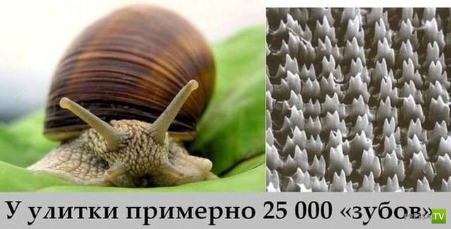 Познавательные и интересные факты в картинках (29 фото)