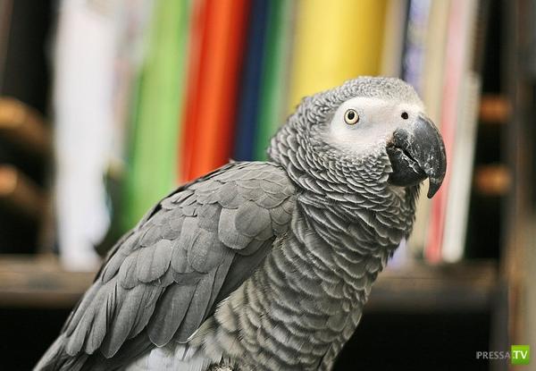 Попугаи способны к абстрактной арифметике
