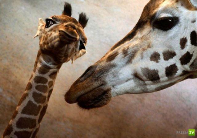 Забавные животные (46 фото)