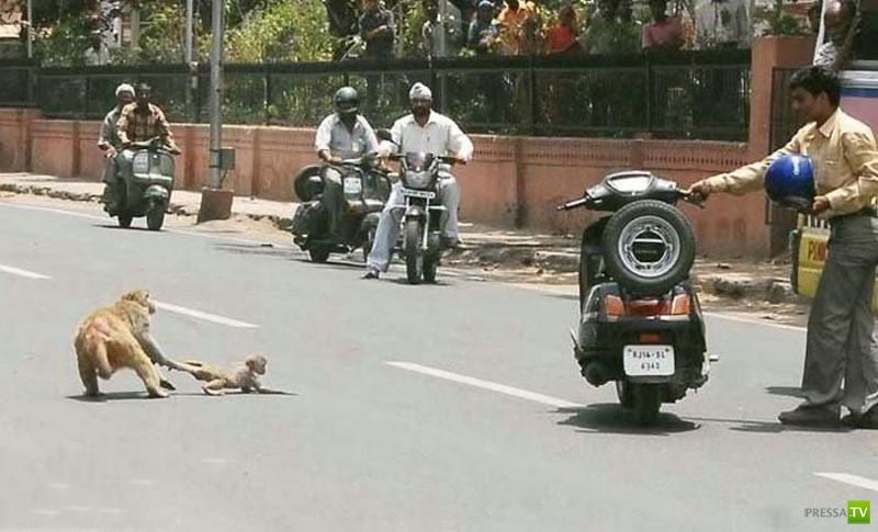 Индия в фотографиях (20 фото)