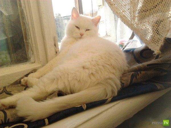 В Екатеринбурге спасли кота выброшенного в реку ...