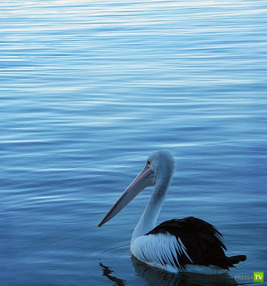 Красивая подборка фотографий птиц (31 фото)