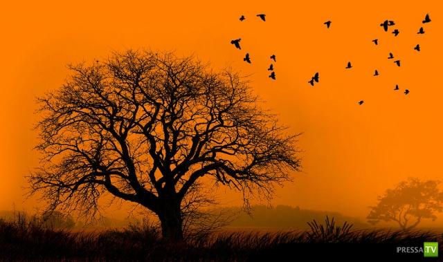 Фотосилуэты от Навида Мугала (Naveed Mughal) (28 фото)