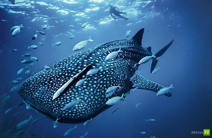 Сказочный подводный мир...