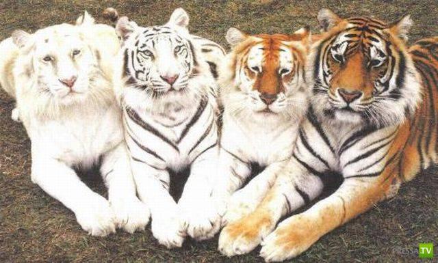 Эти забавные животные (19 фото)