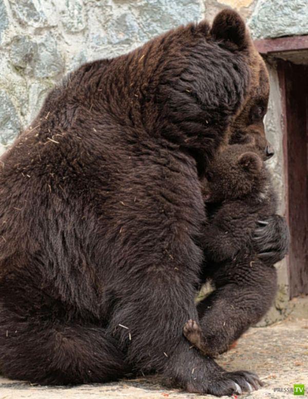 У медведей тоже есть чувства (4 фото)