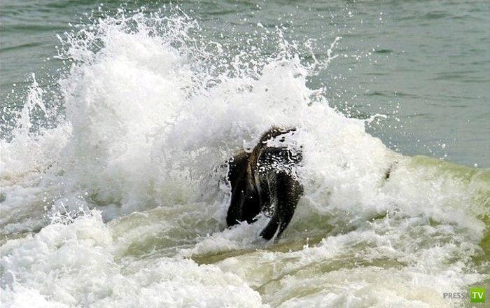 Забавный слоник на пляже (7 фото)